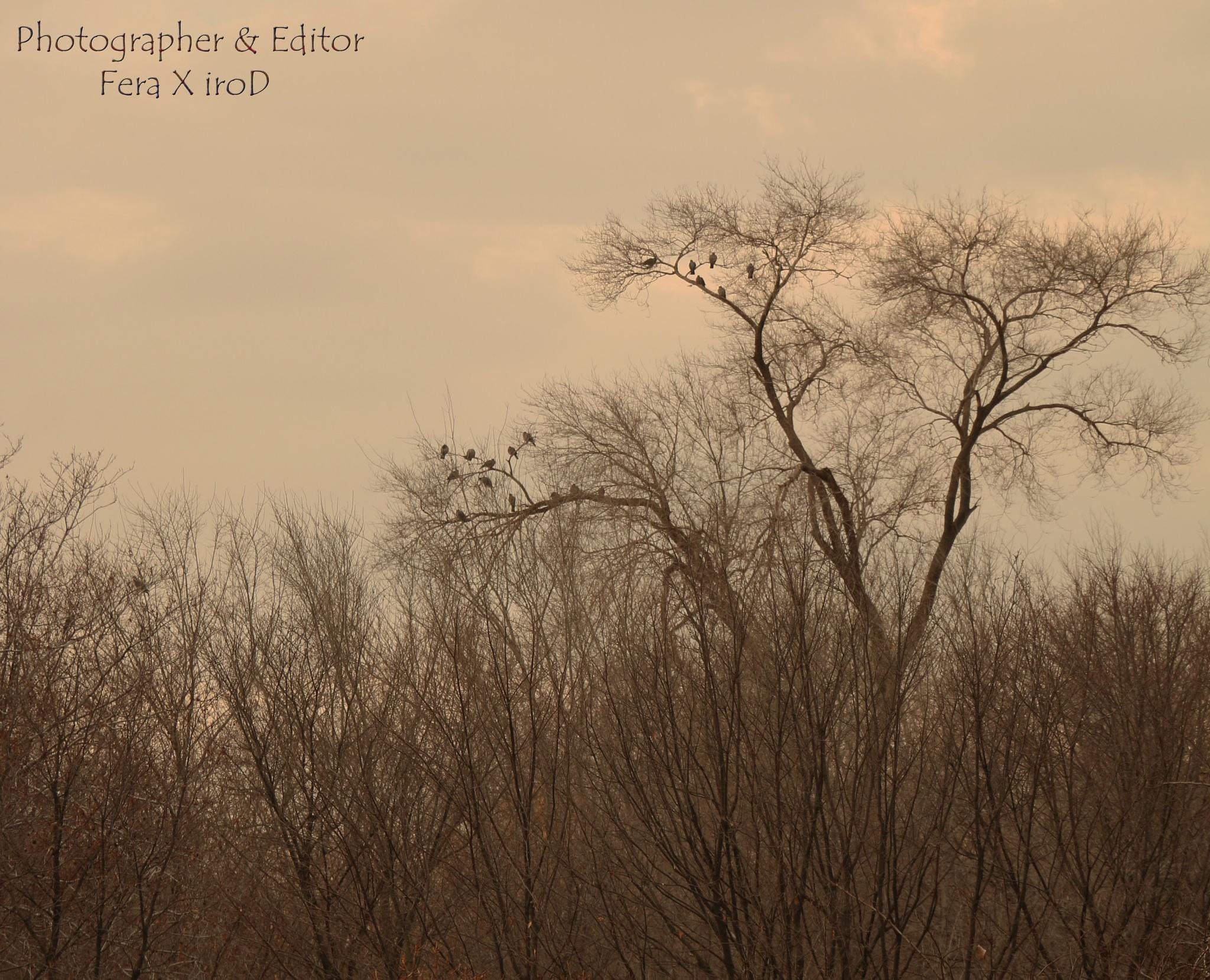 autumn tree by mojtabadorri