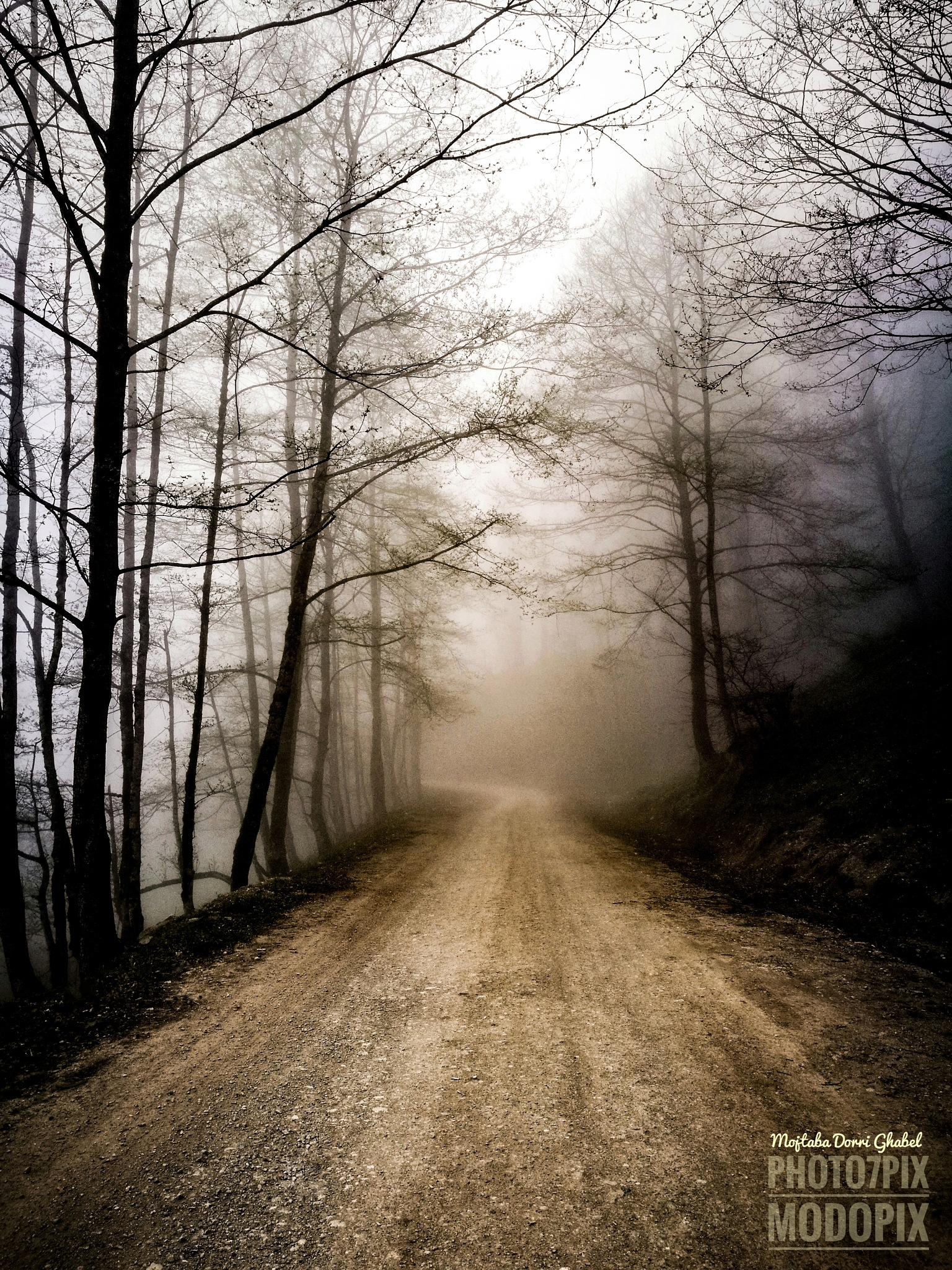 foggy road  by mojtabadorri