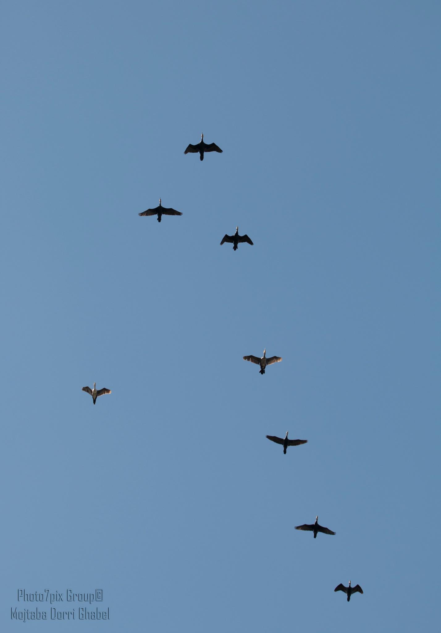 squadron  by mojtabadorri