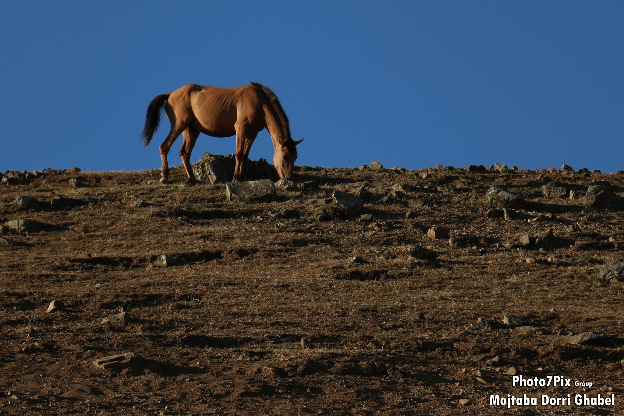 horse by mojtabadorri