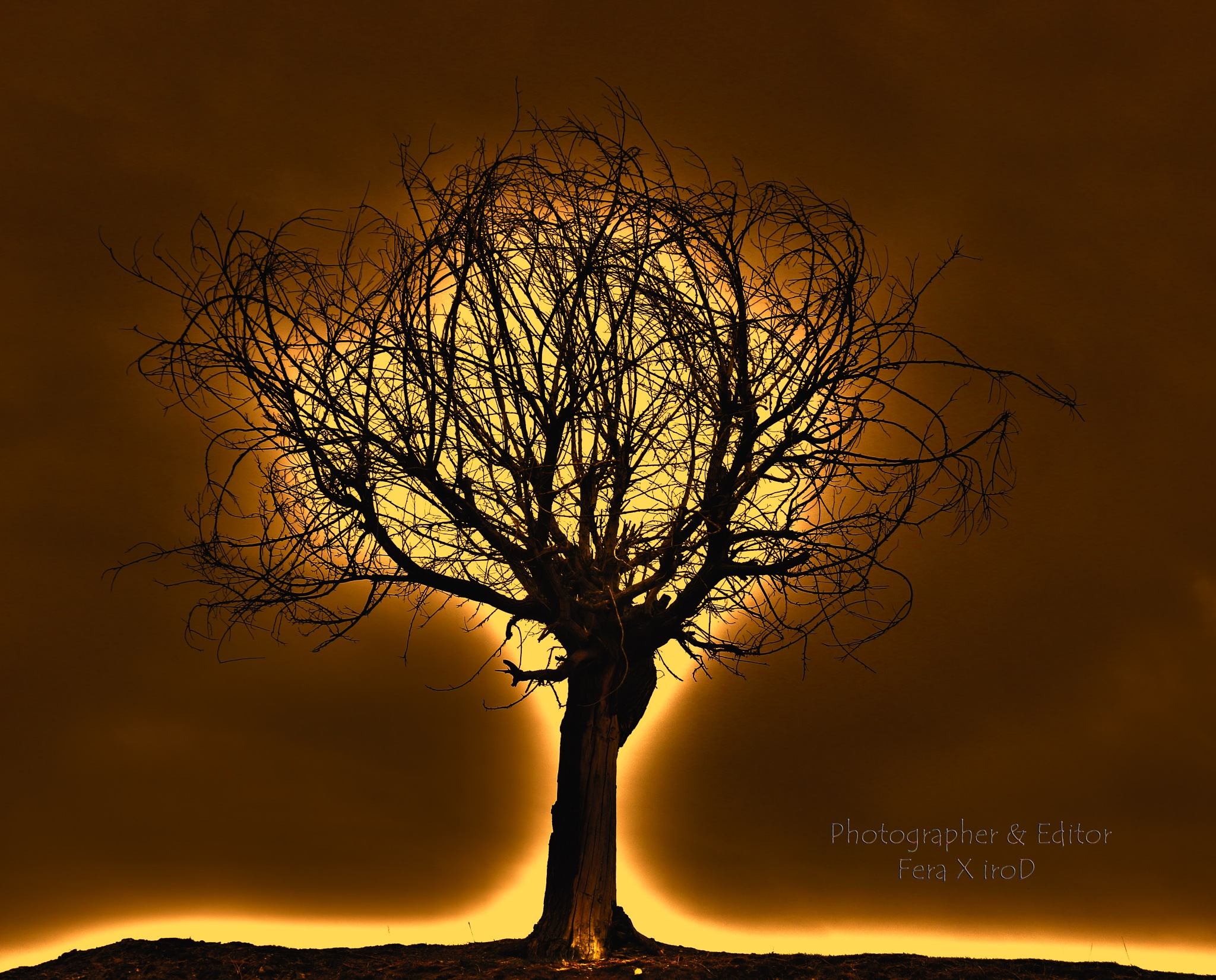 holyfire tree by mojtabadorri