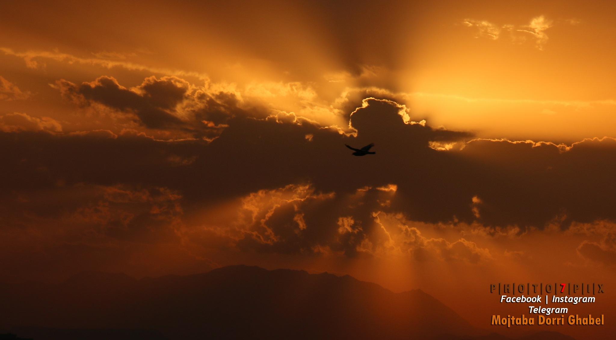 rising sun by mojtabadorri