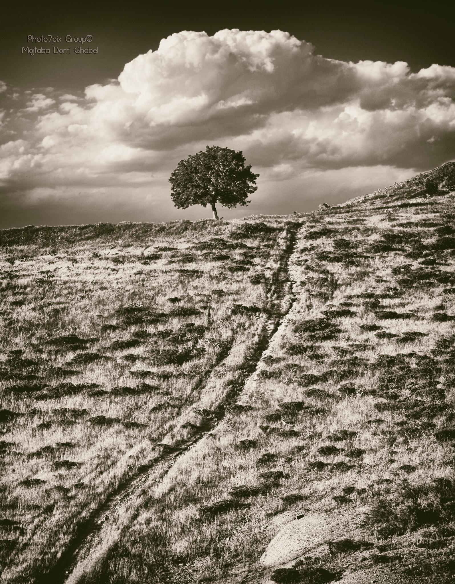 Untitled by mojtabadorri