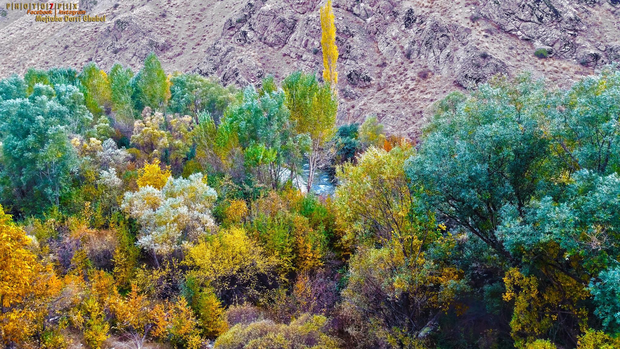 Autumn by mojtabadorri