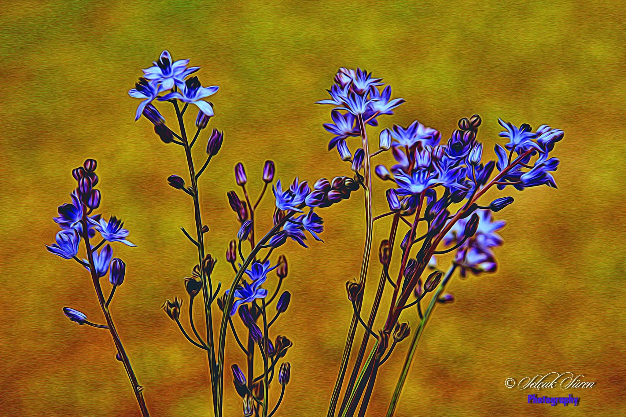 Blue by Selcuk Suren
