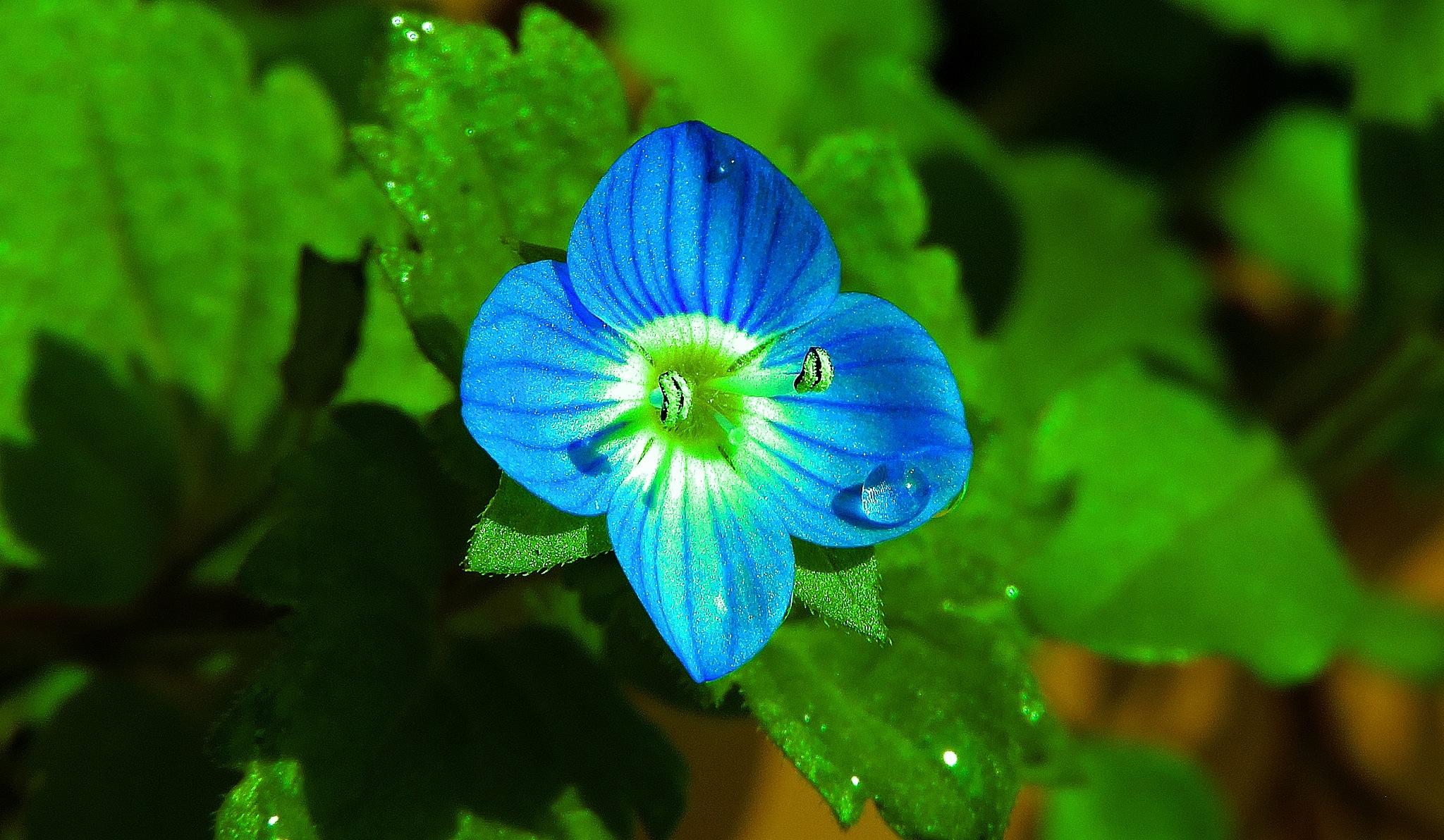 flower by bilal güldoğan