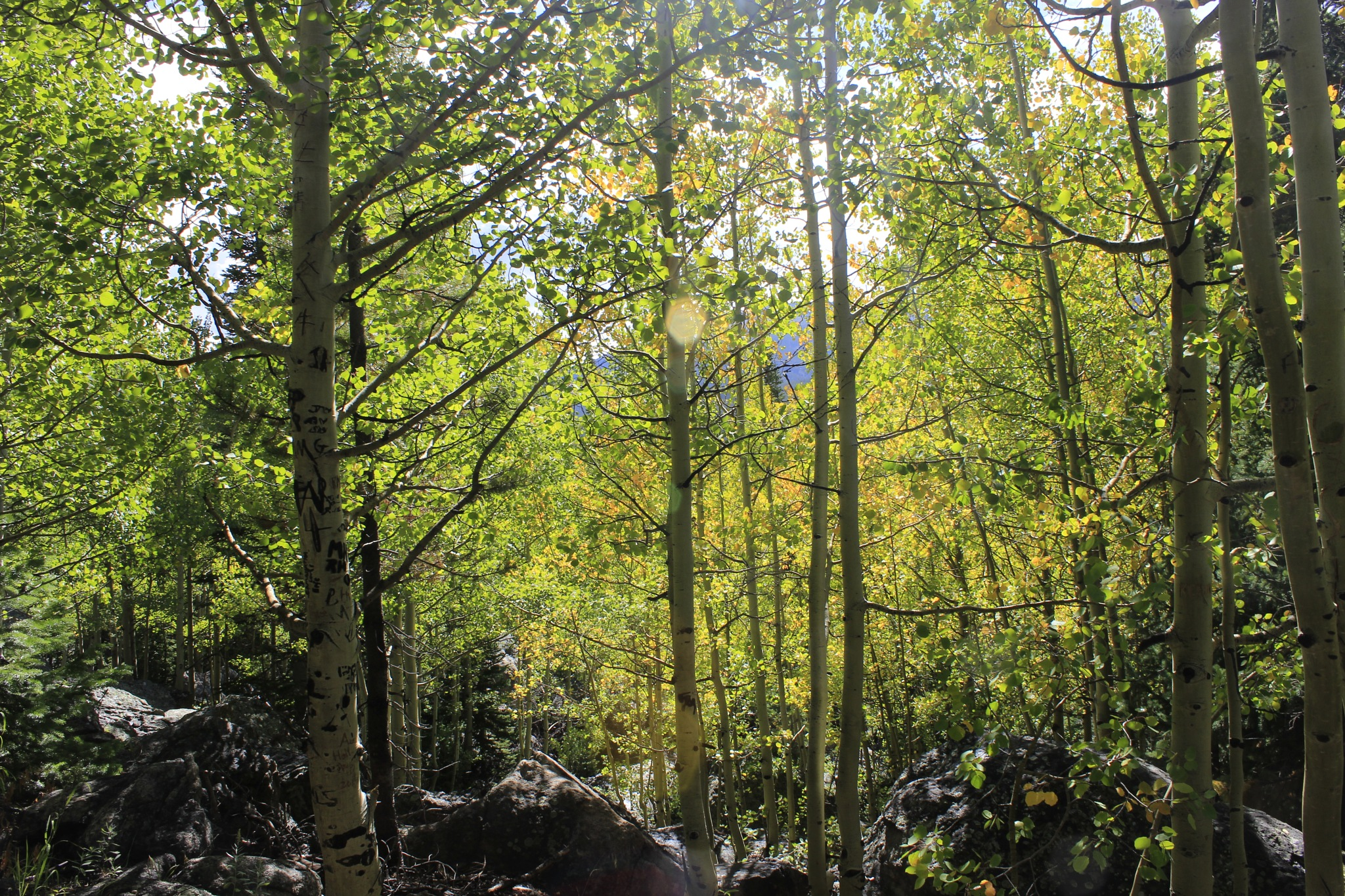 Forest by Lynda Clayton