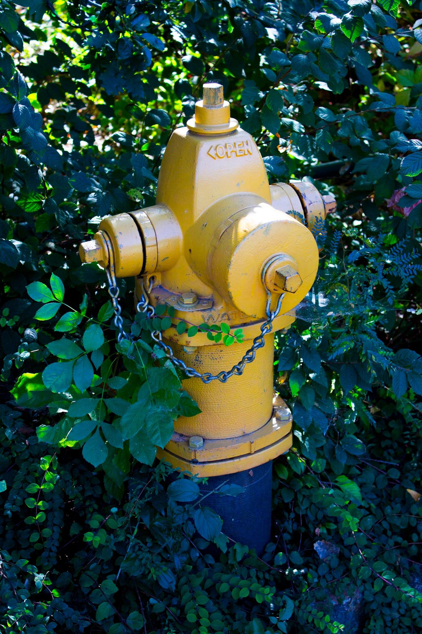 Yellow Fire Hydrant by Lynda Clayton