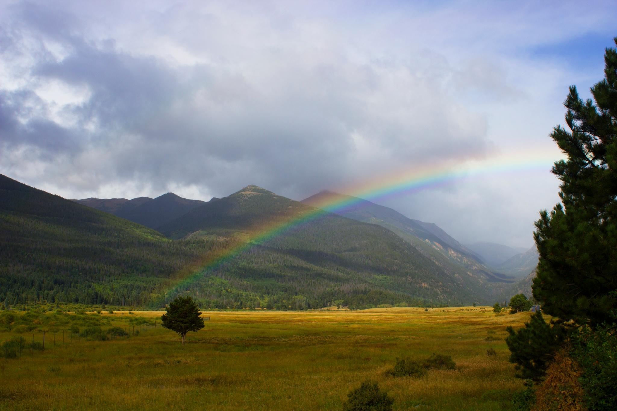 Rainbow by Lynda Clayton