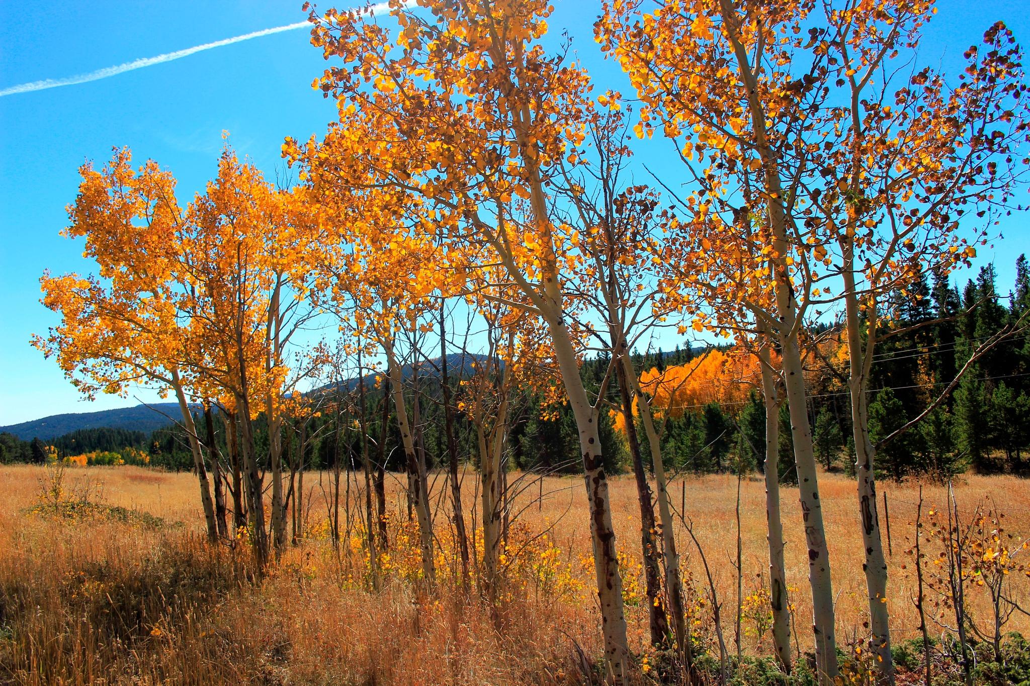 Autumn! by Lynda Clayton