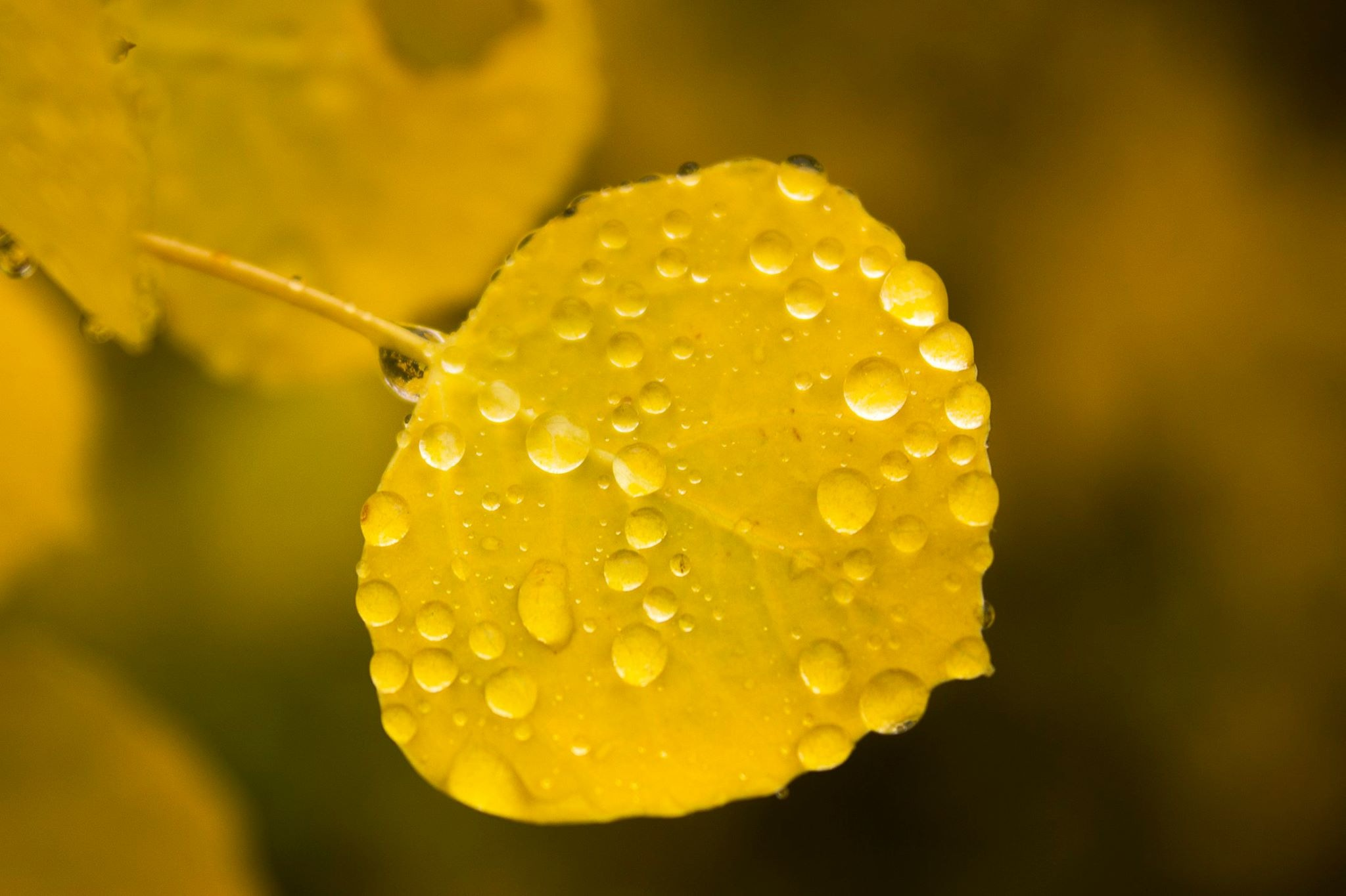 Rainy Fall Day in the Rockies by Lynda Clayton