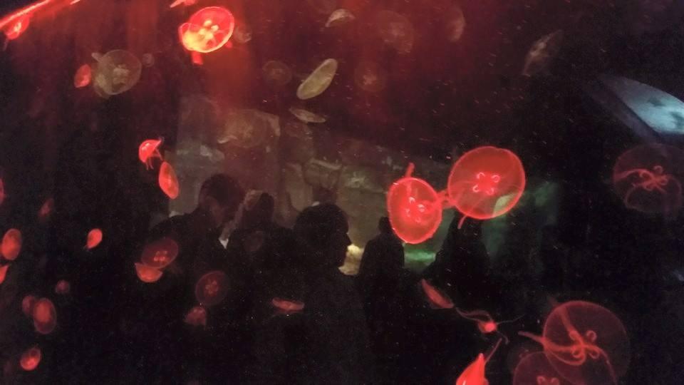 JellyFish In Motion by Traci Freeman Marsh