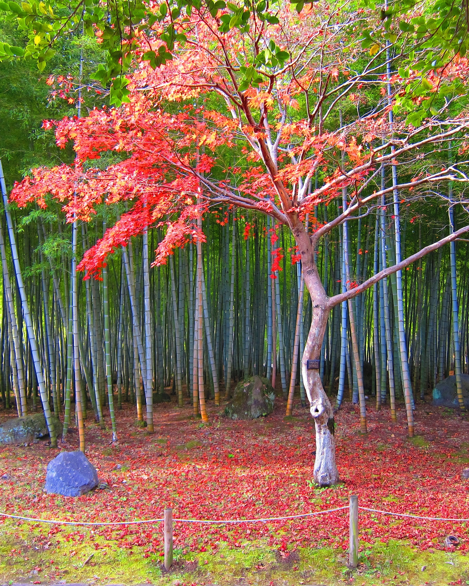 autumn still by enrouxte