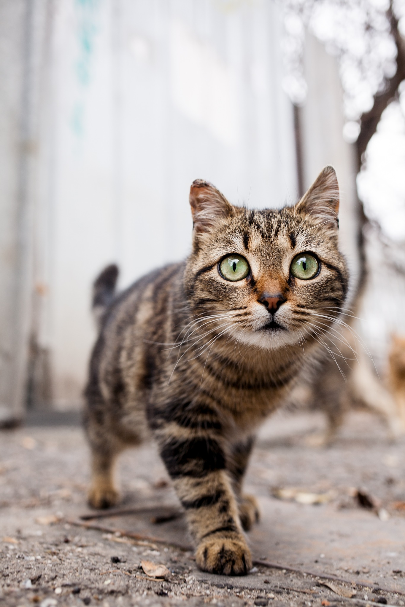 Cat Eyes by Yaroslav Boshnakov
