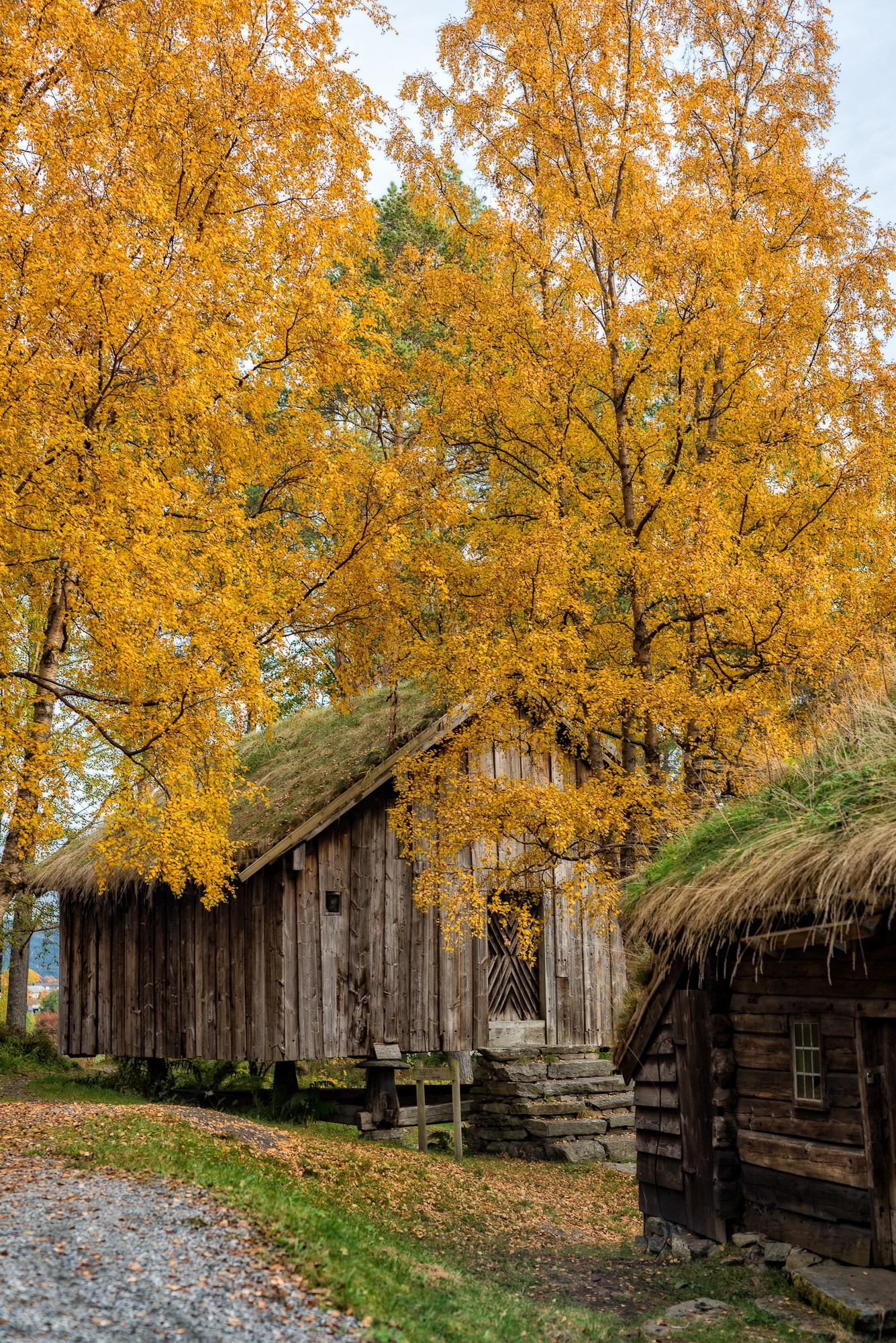 """""""The Colors of Autumn 2"""" by Else Ulla"""