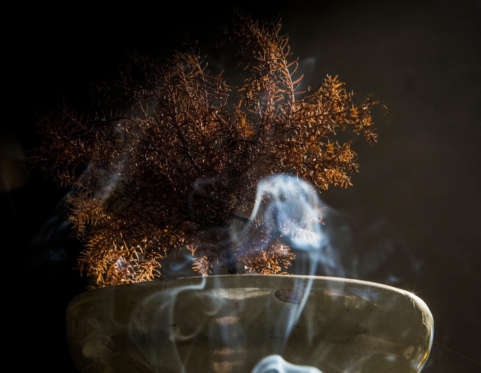 Smoked Nature by verovisaggio