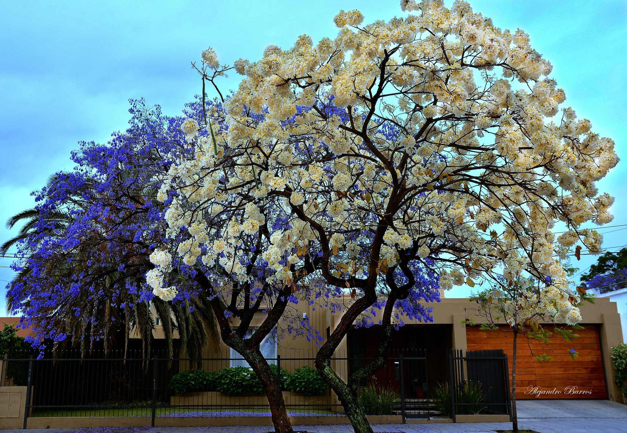 Primavera by 1alejandro6