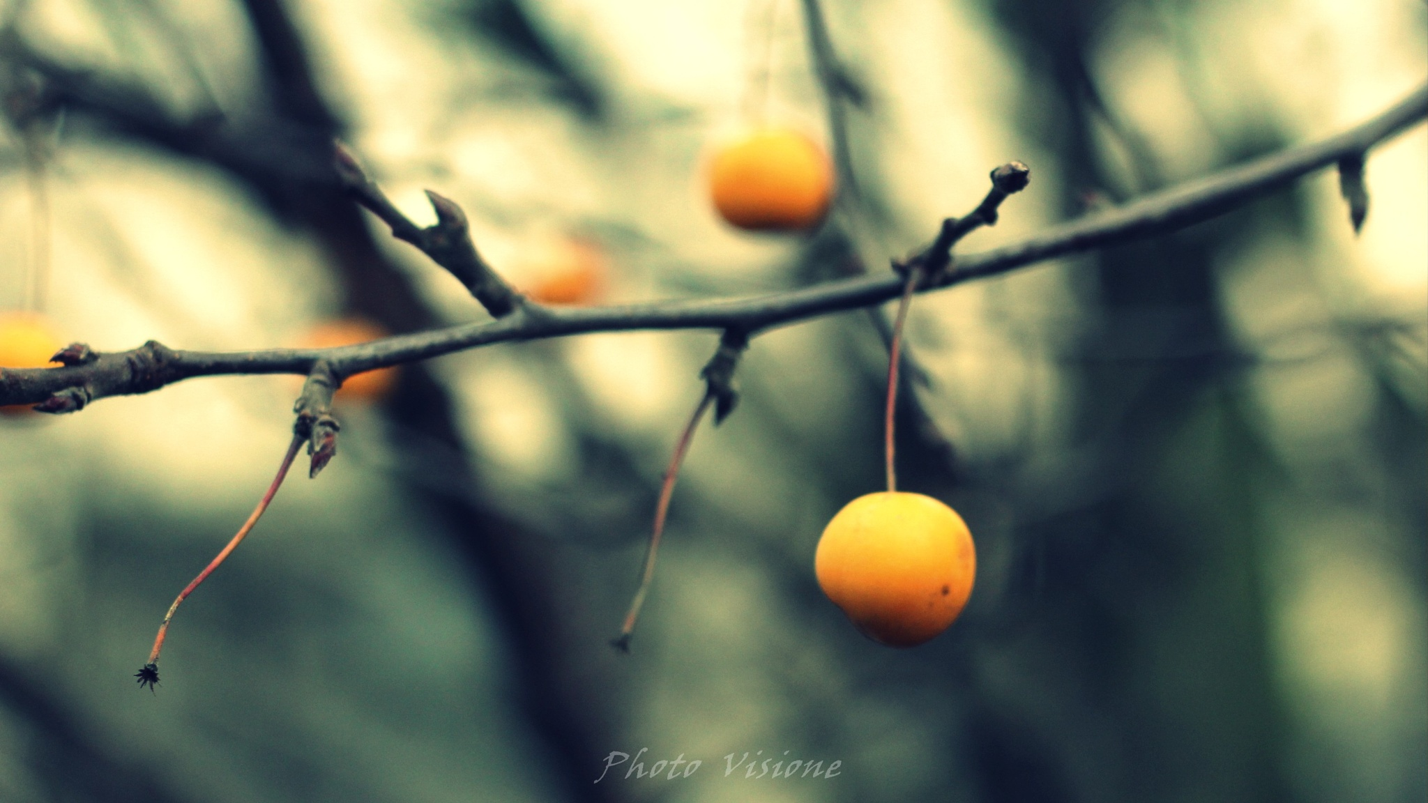 Untitled by Photo Visione