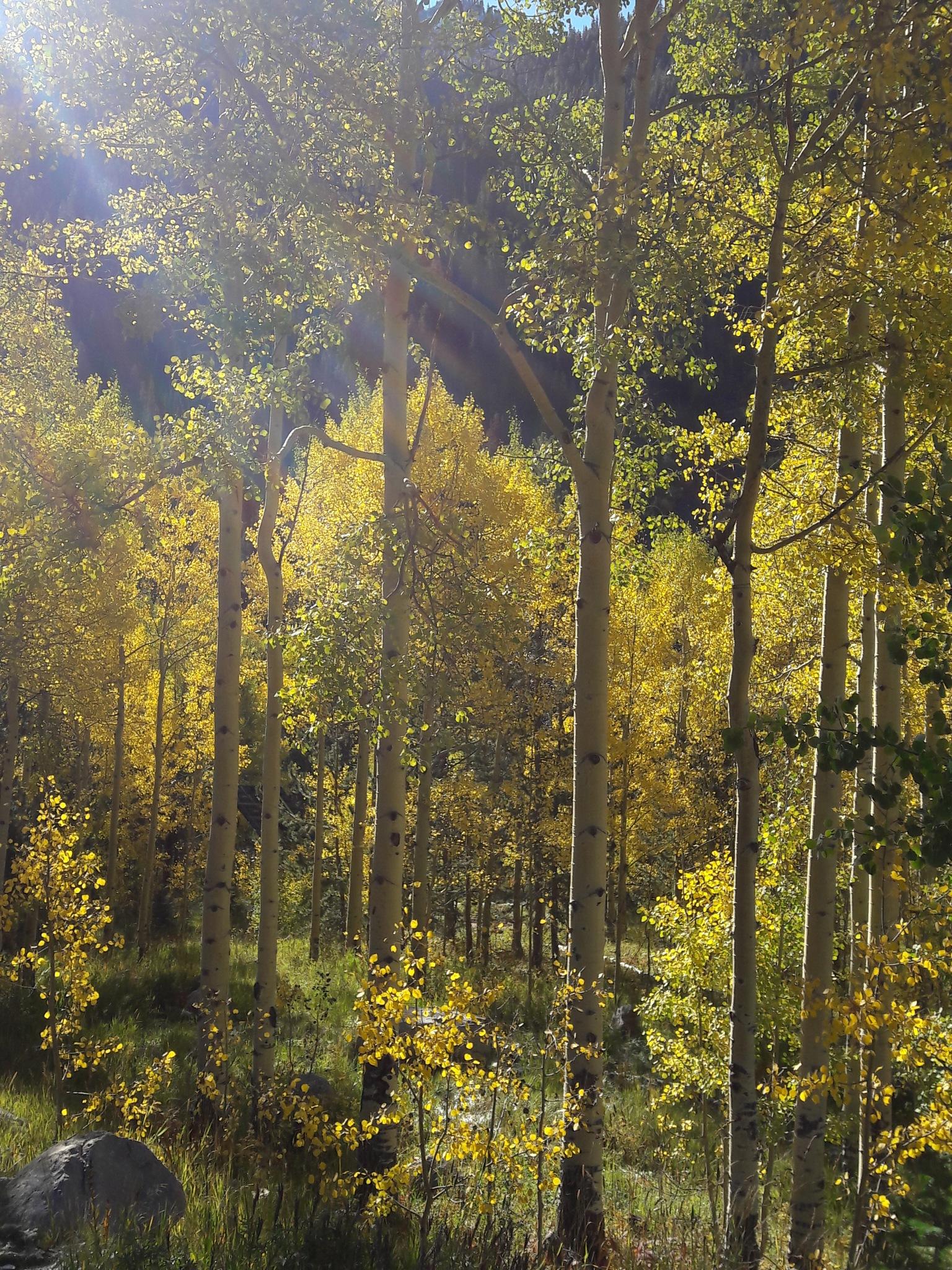 List in fall by Karen Murphy