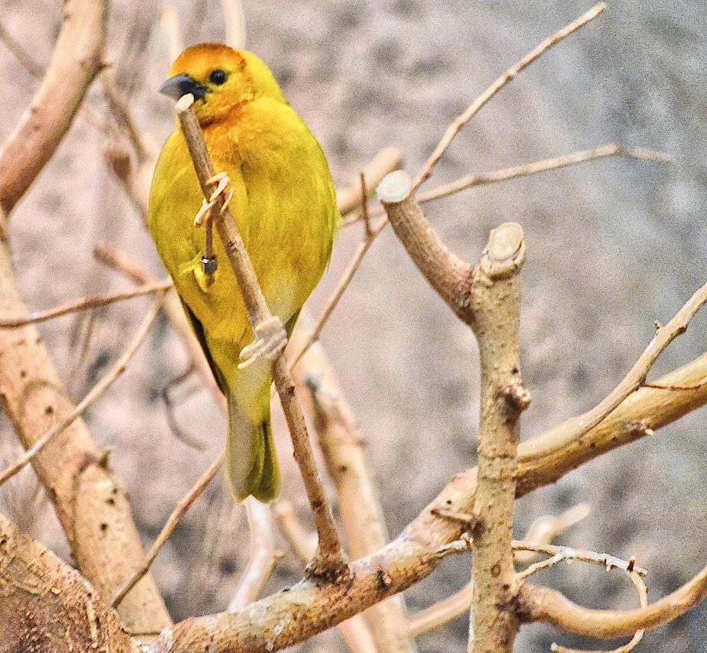 Caged bird by Sunil