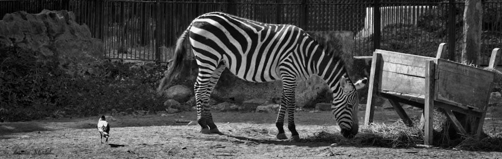 Cairo Zoo  by Lamia Khalil