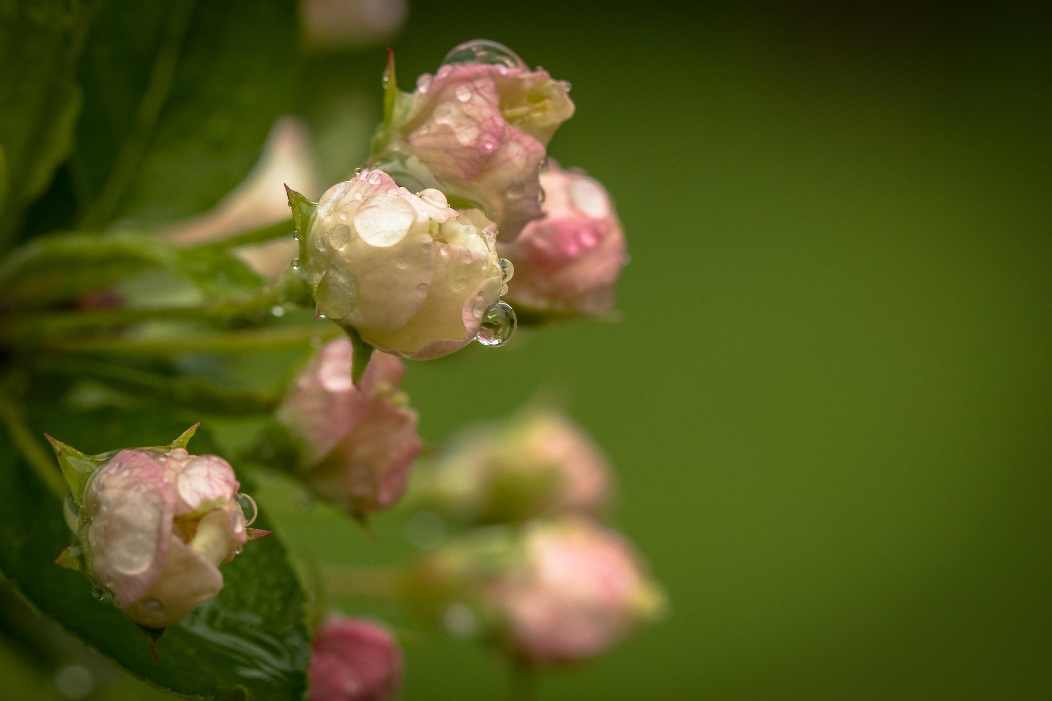 Rainy day by Anne_V