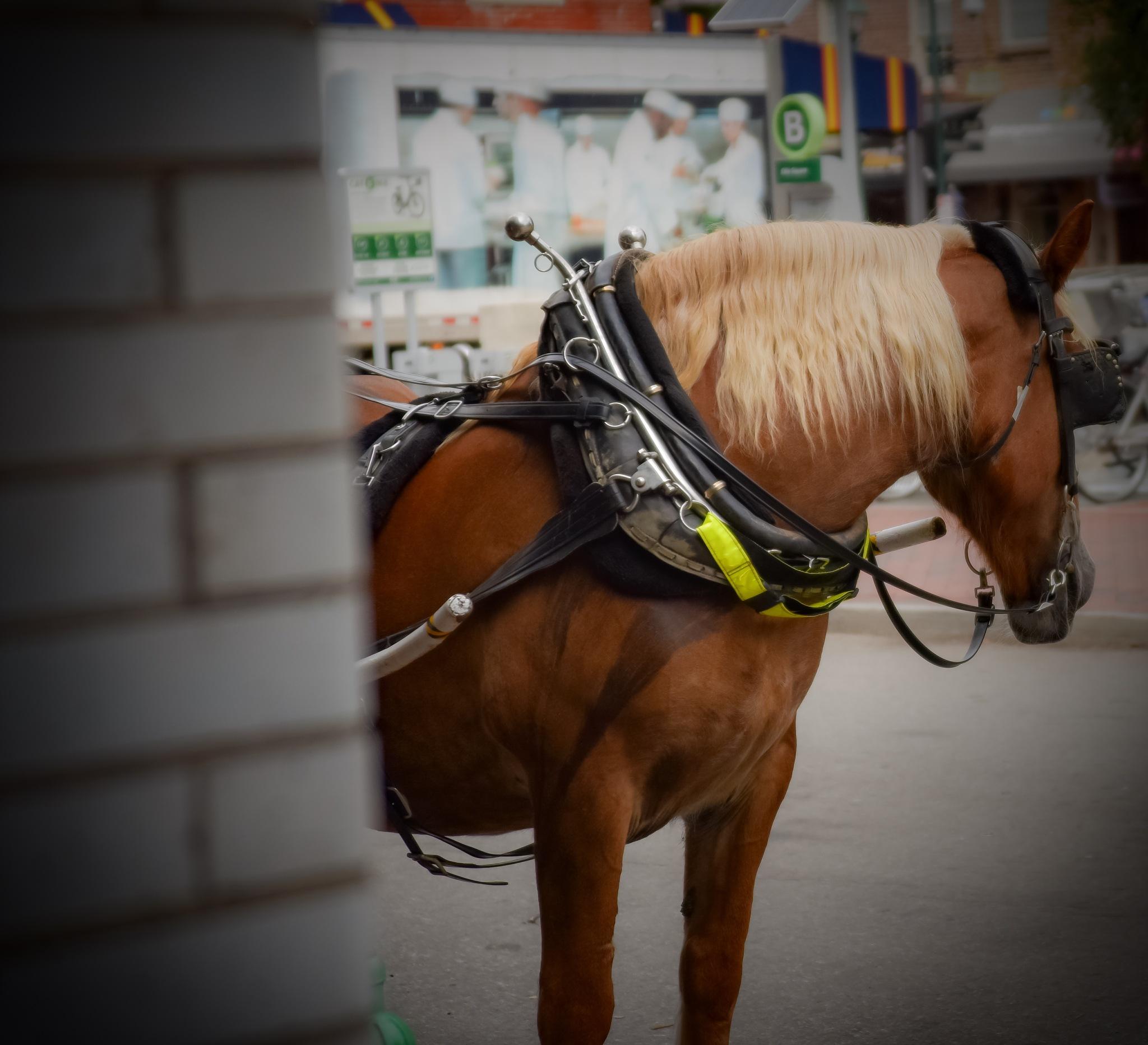 """""""Horse shy"""" by RWM"""