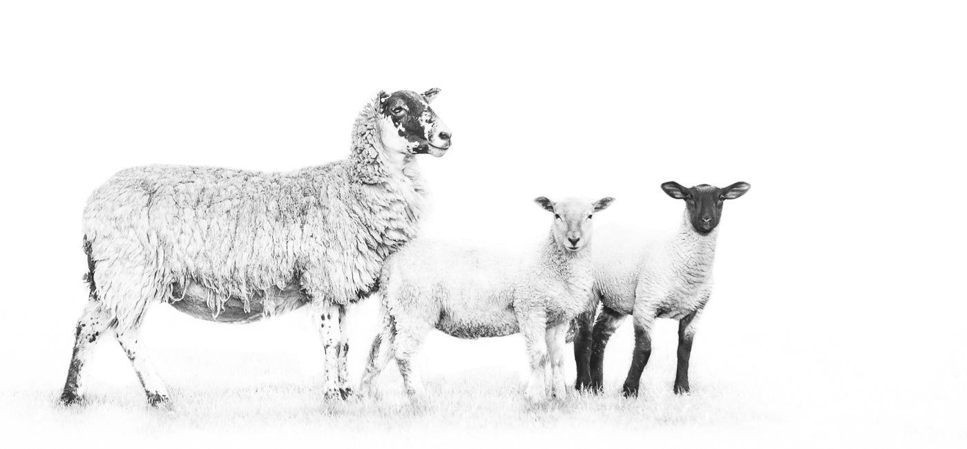 Watching her flock by Jason Bax