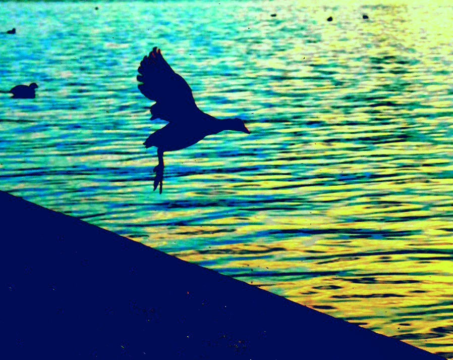 Bird jumps in the water by StudioAnjaPhotography