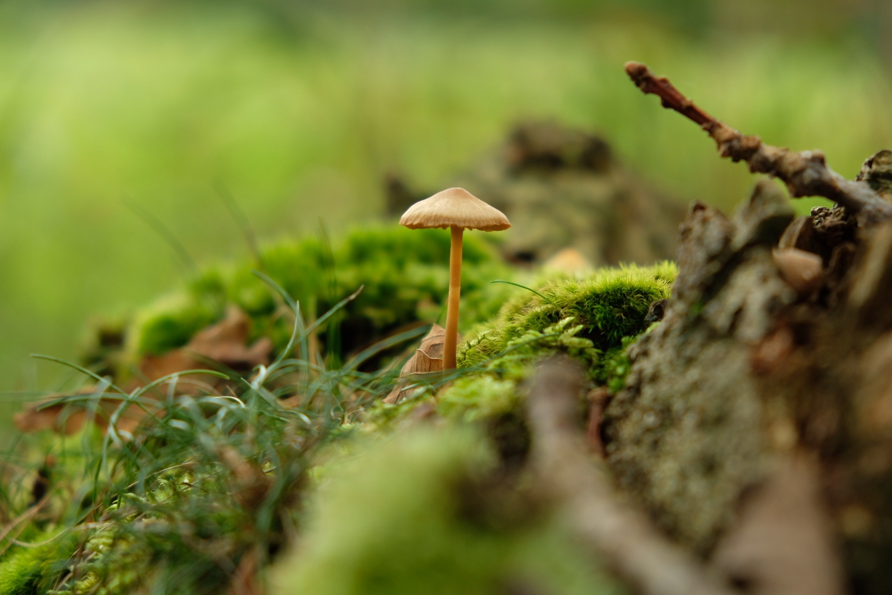 Fungus in the middle by StudioAnjaPhotography