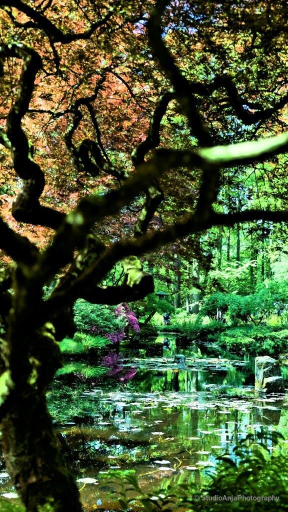Reflection Japanese garden by StudioAnjaPhotography
