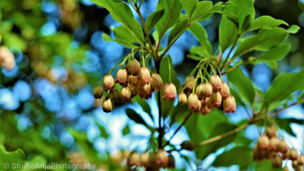 little flowers by StudioAnjaPhotography