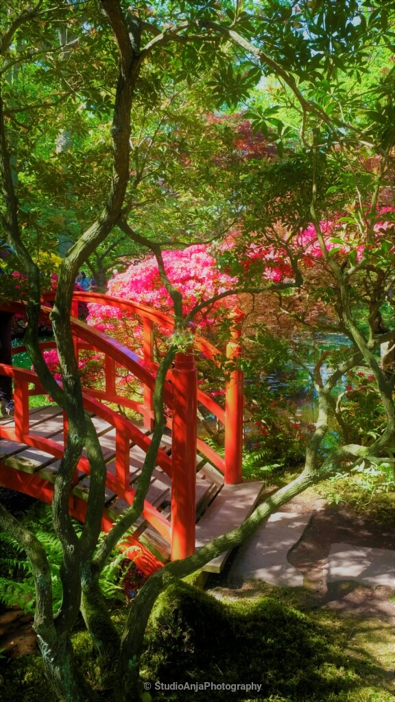 Red bridge and roze flowers by StudioAnjaPhotography