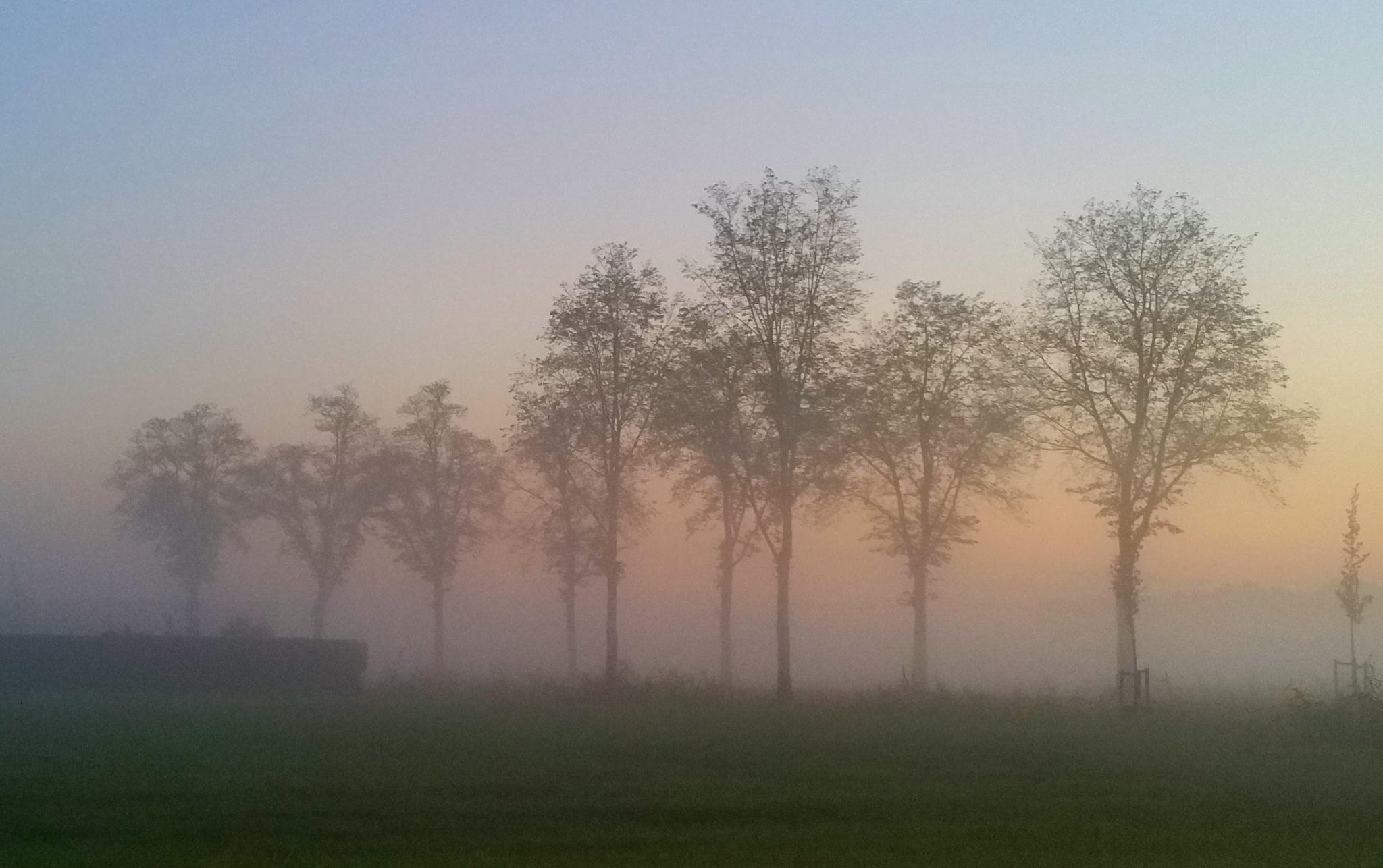 Tree row in fog by StudioAnjaPhotography