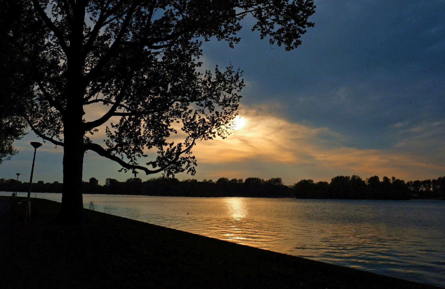 Sunset with tree by StudioAnjaPhotography