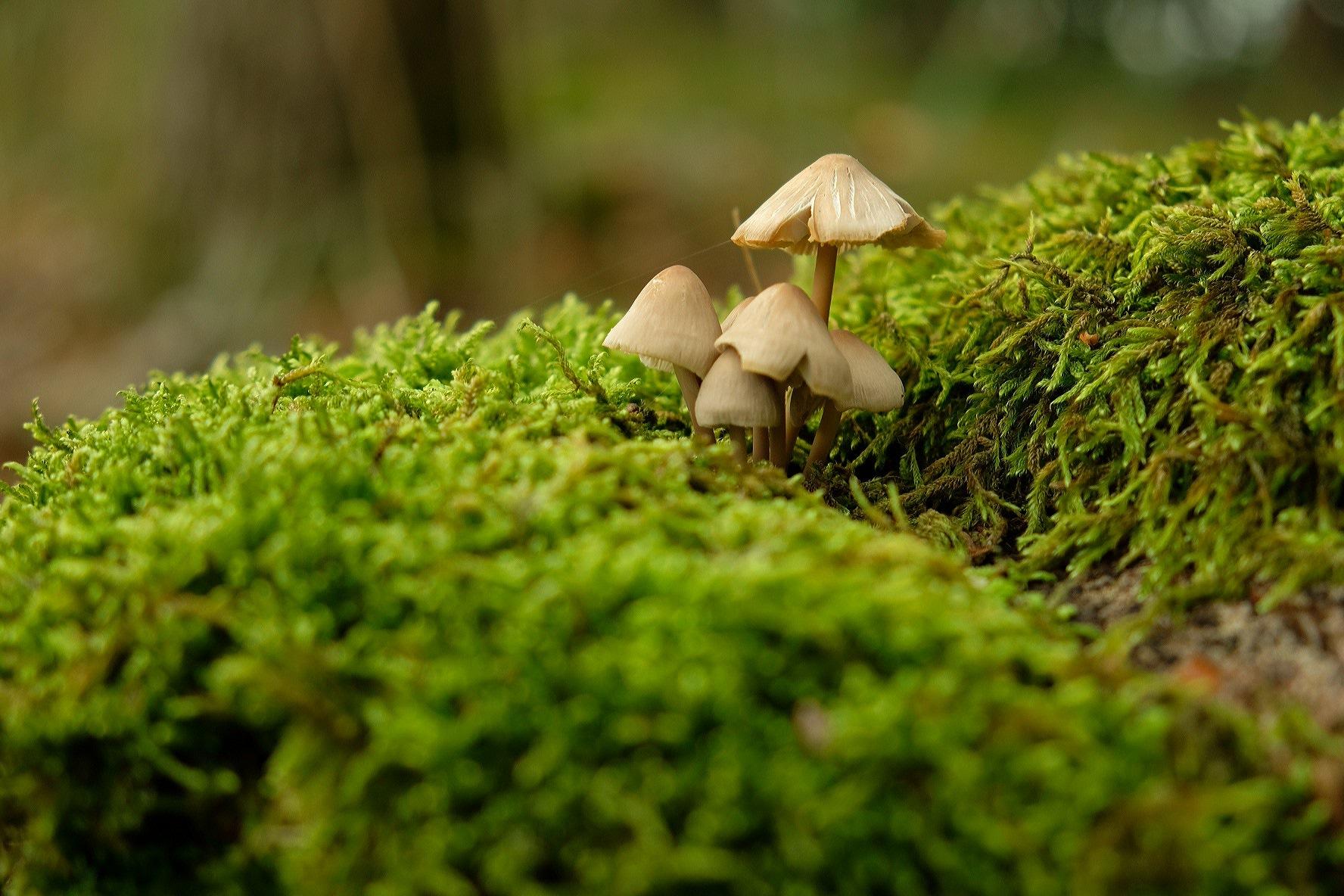 Fungus by StudioAnjaPhotography