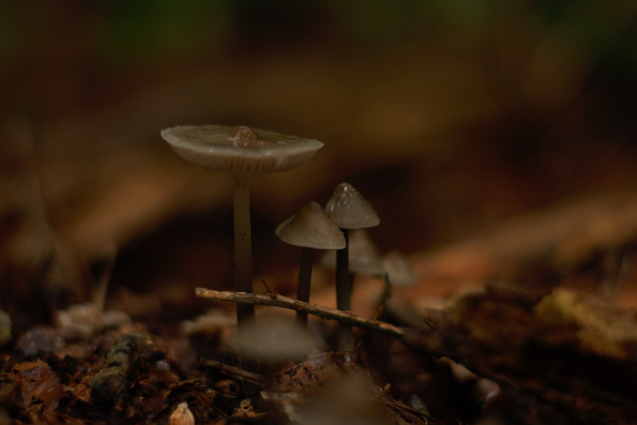 Forest Mushroom by StudioAnjaPhotography