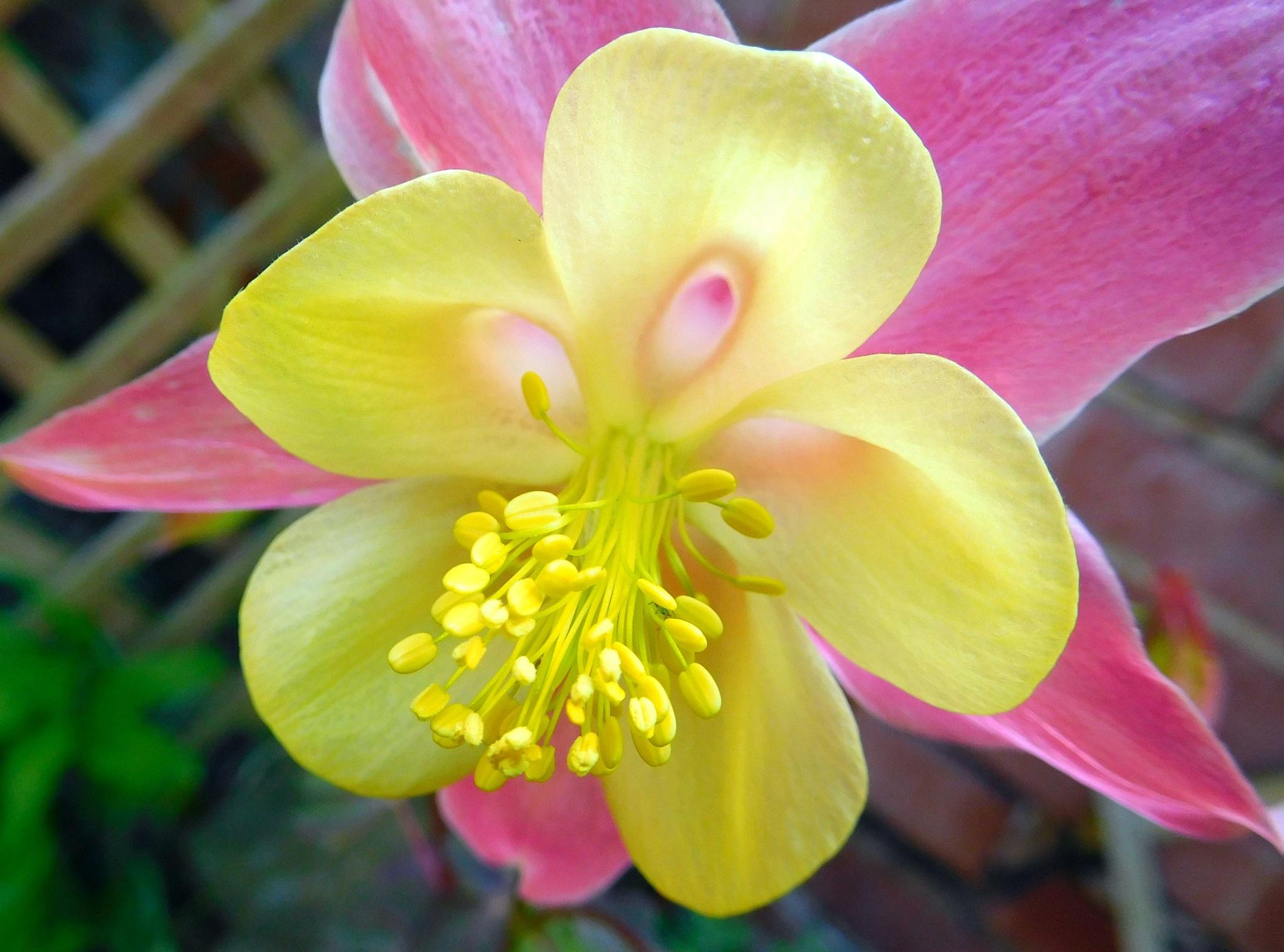 Flower by Joe Donnison