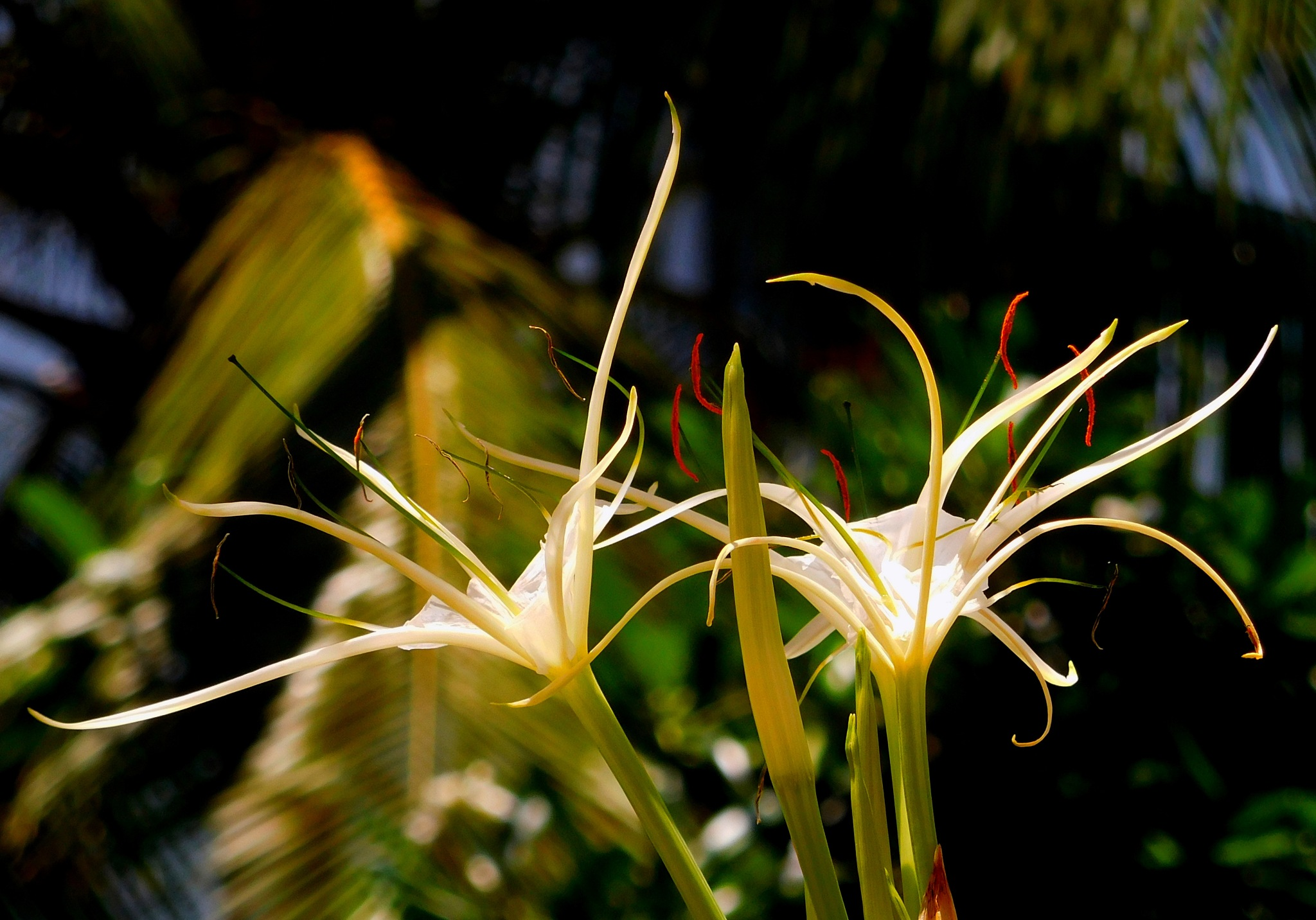 White Lily  by Joe Donnison