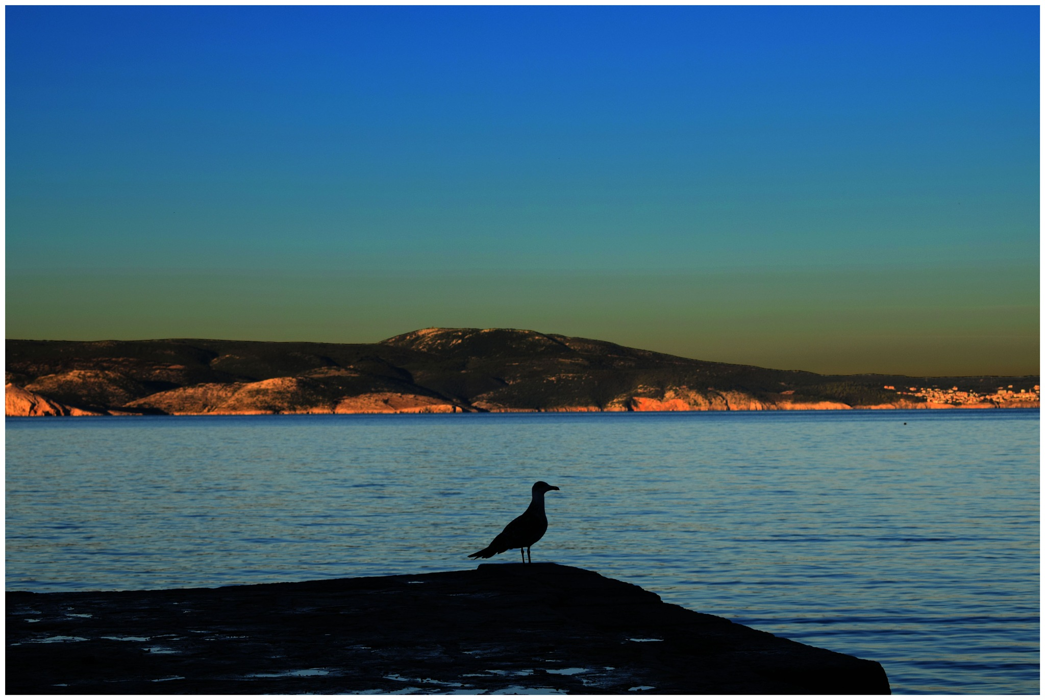 Seagull by Rockaway Photography