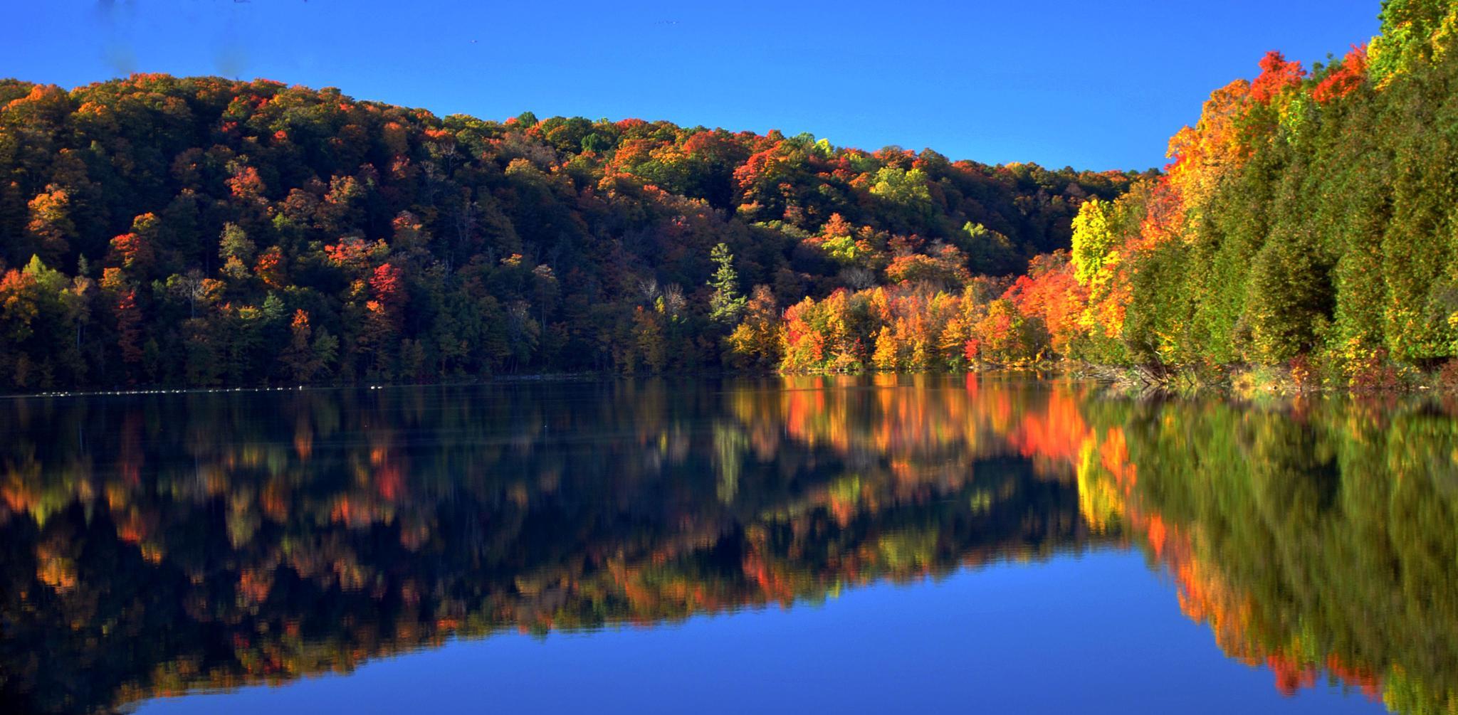 Autumn View by Cheryl Rendino