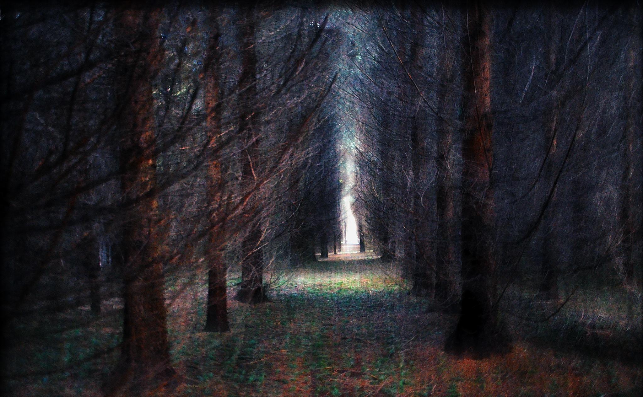 Dream Grove by Cheryl Rendino