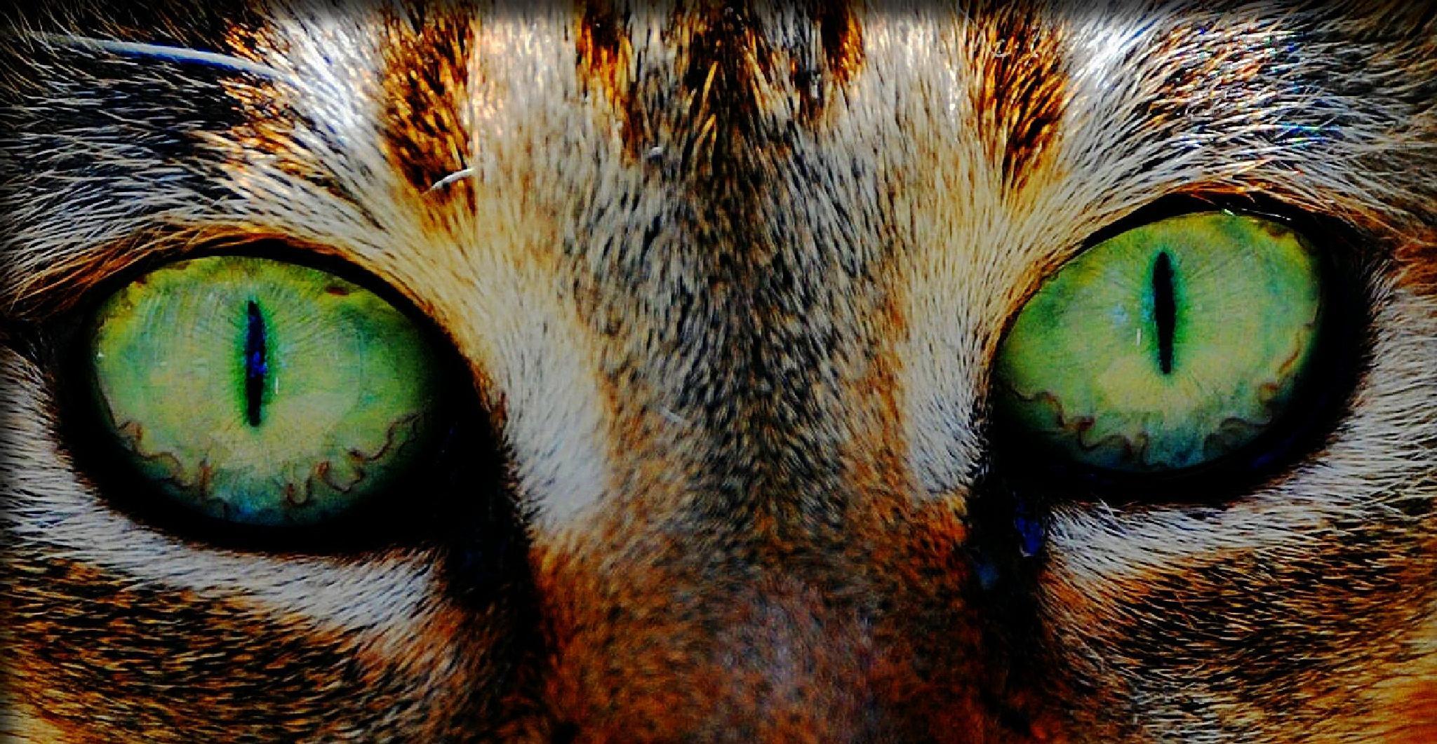 Cat Eyes by Cheryl Rendino
