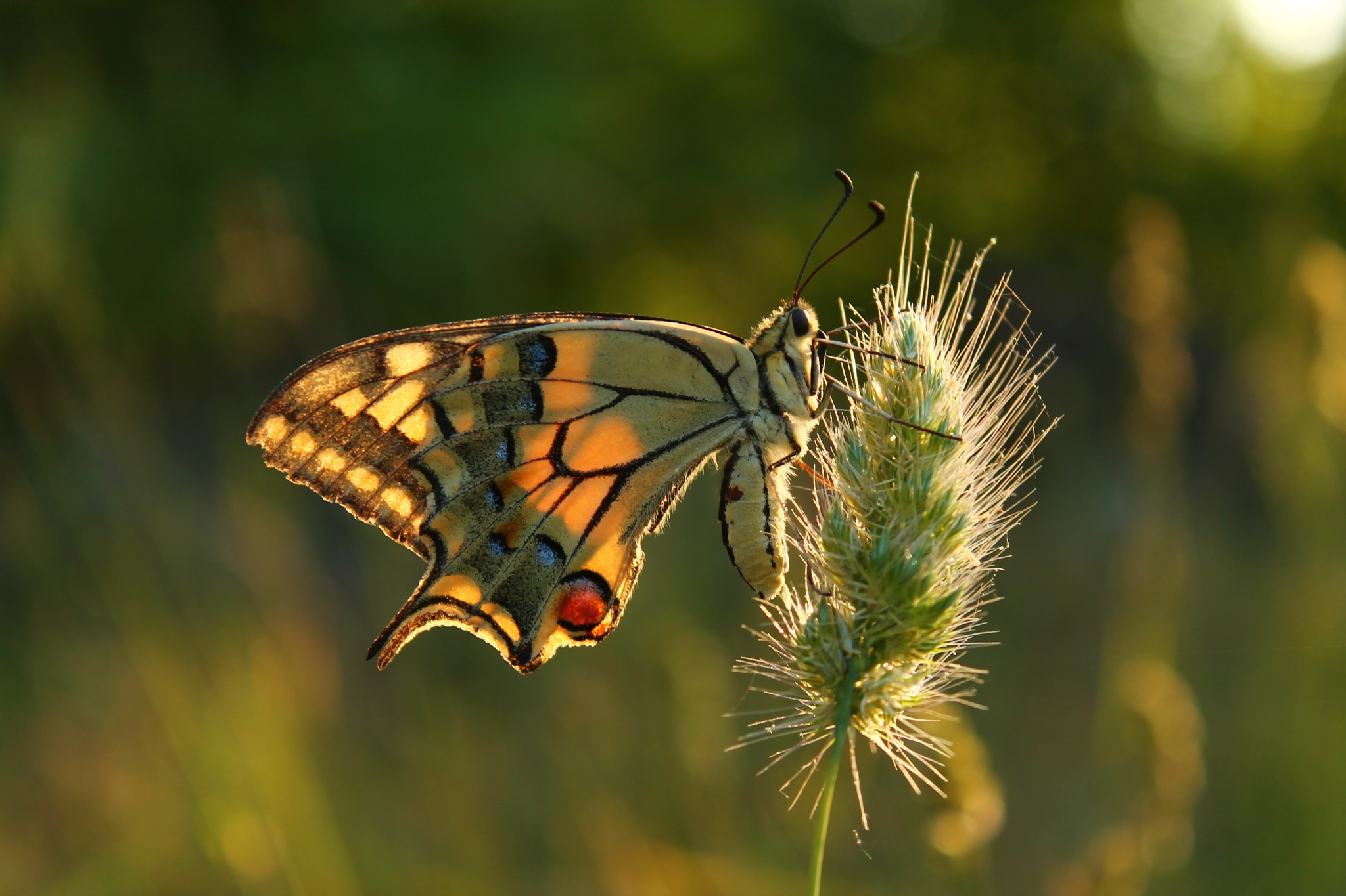 Photo in Macro #sun #insect #animlas #macro #close up #butterfly #ever #seen #beautiful #photography #spring #lens #camera #color