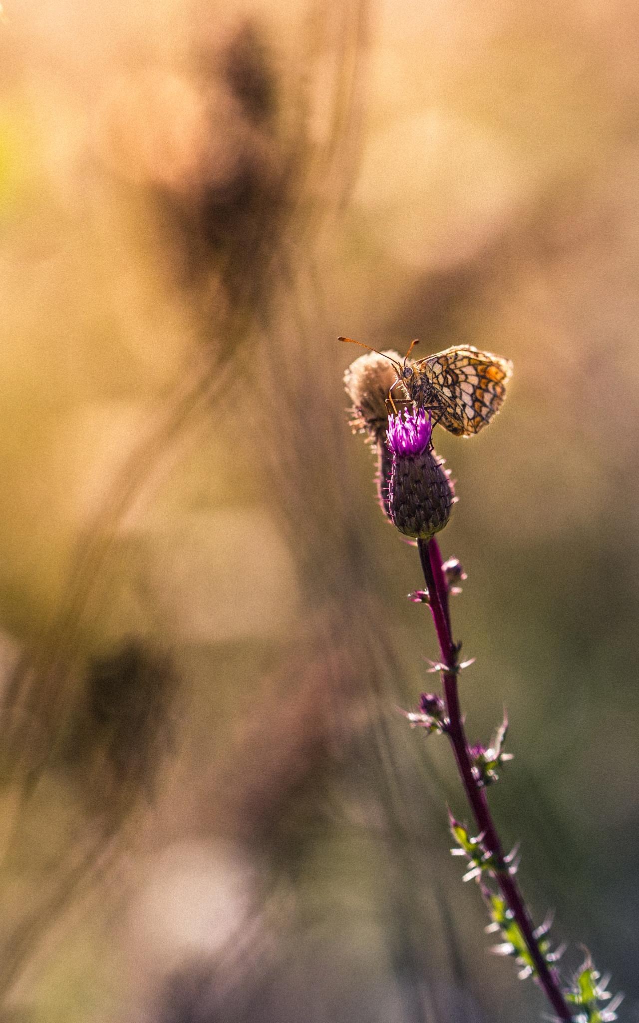 Butterfly by Romain L.