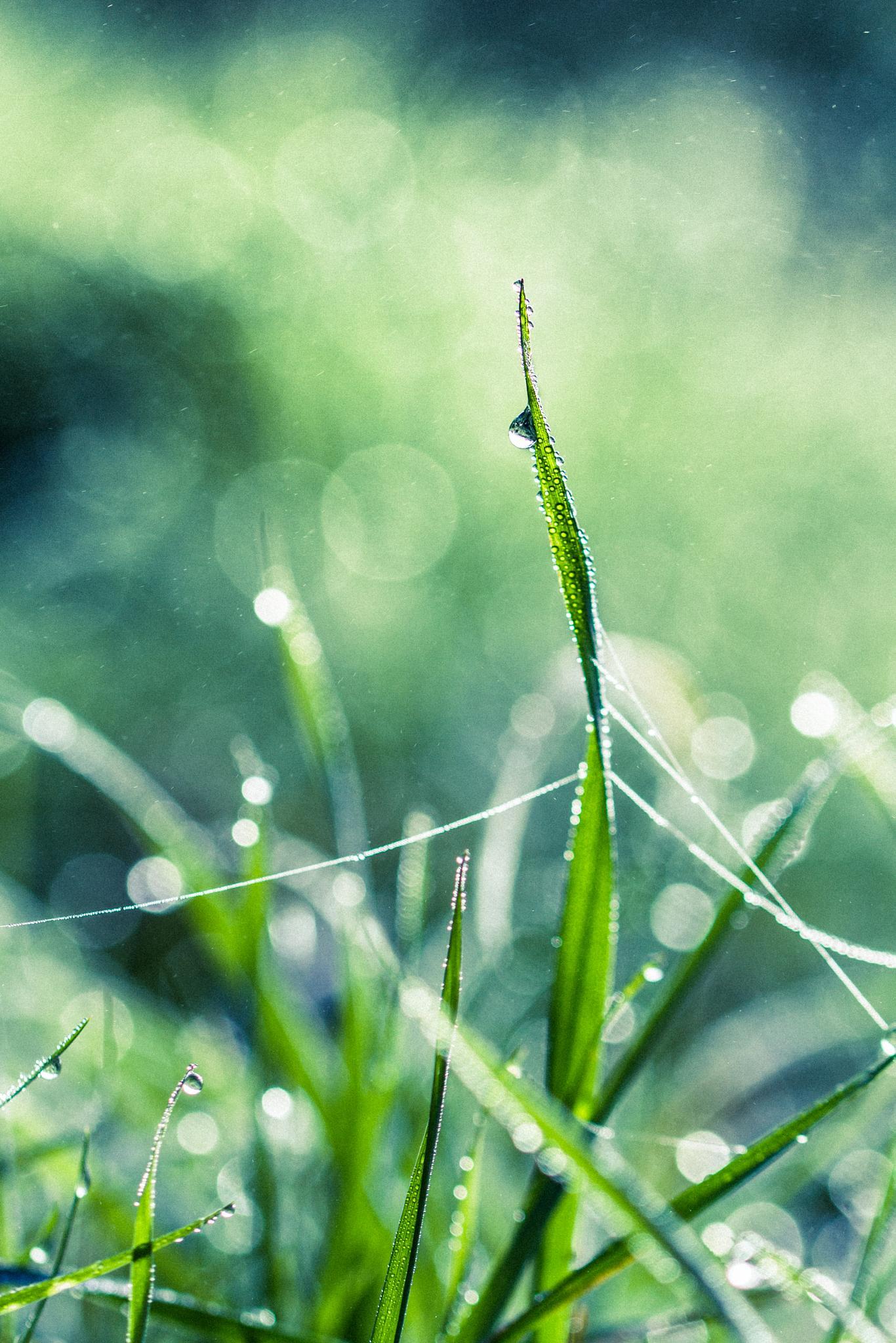 Photo in Macro #grass #nature #macro