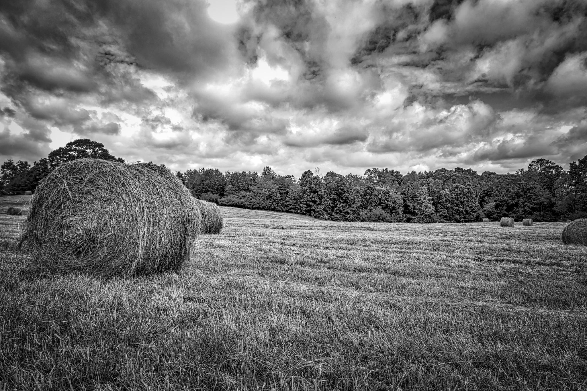 Hay Bales - North Georgia Mountains by Mark Streit