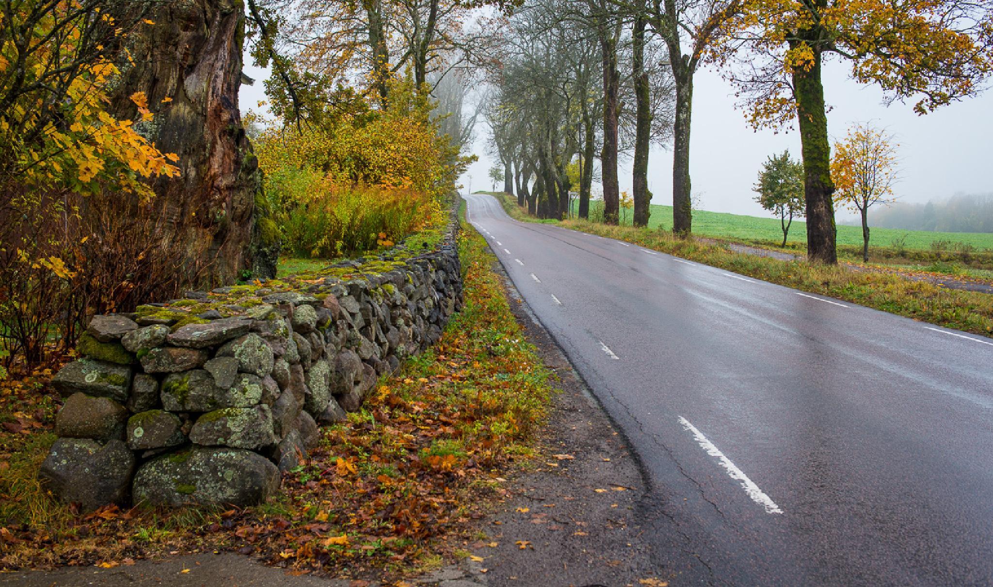 Walking in the rain by ErikLerbaek