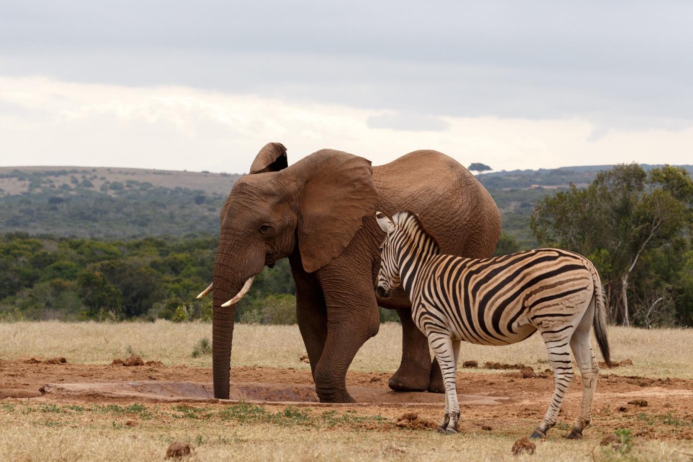 Elephant enjoying his water by Charissa de Scande Lotter