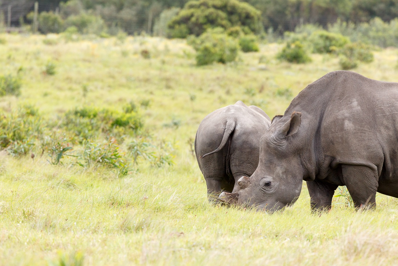 Rhino standing close to her baby by Charissa de Scande Lotter